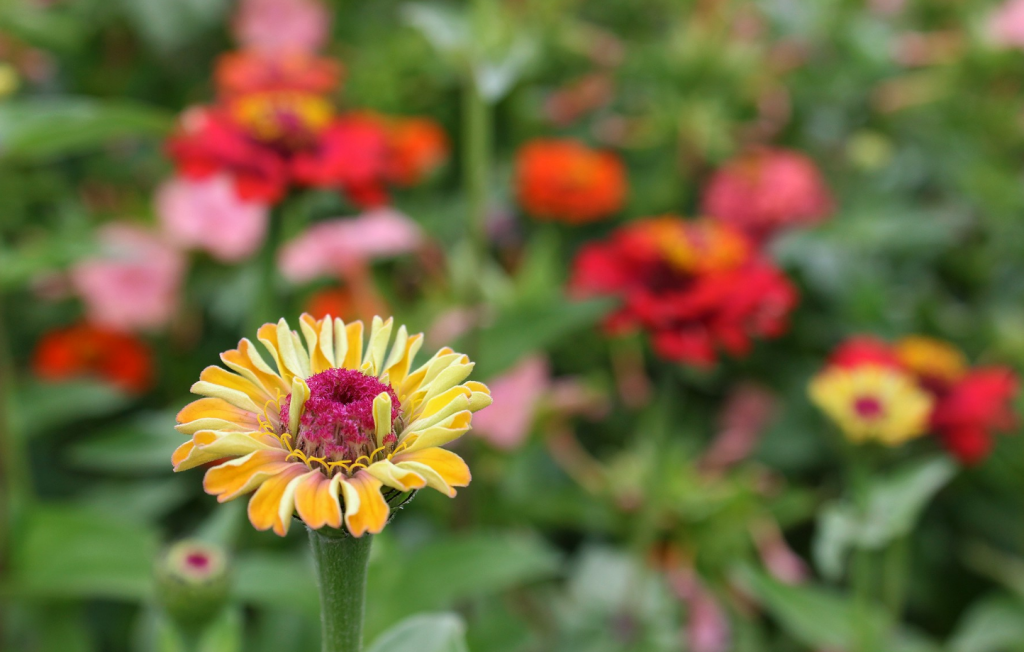 Plants and Flowers That Bloom All Year Round